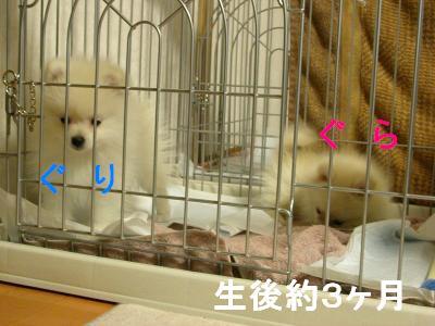 DSCN0852_convert_20090530201308.jpg