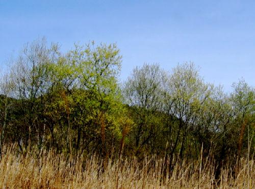 2008414-19.jpg