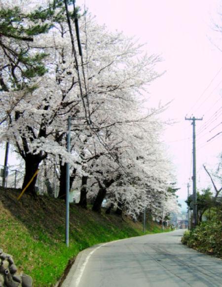 2008423-4.jpg