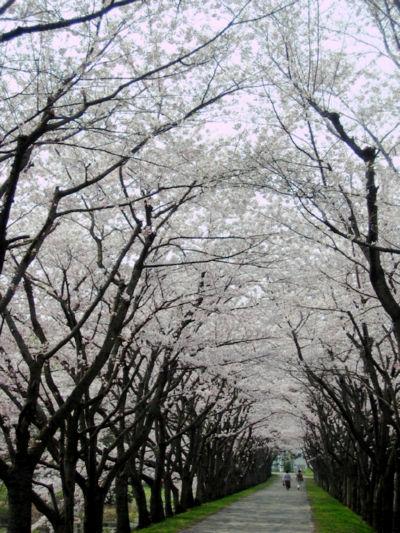 2008423-5.jpg