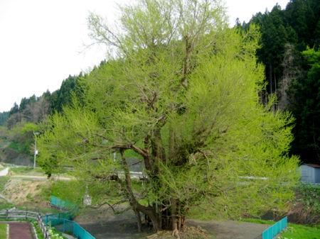2008503-10.jpg