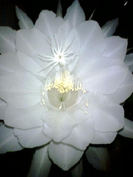 2008kinchan1.jpg