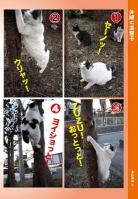 nekojarashi-3_20090721181705.jpg