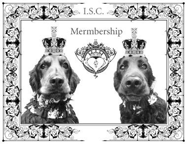 members card2