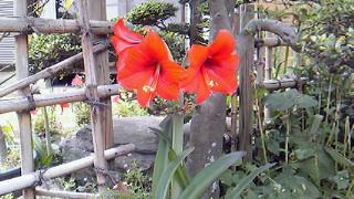 庭の花03
