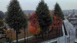 秋の公園 診療所より2010