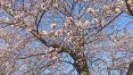 2012.04 埼玉の桜