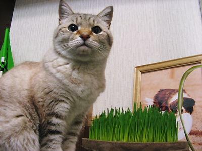 2008-3-2-san4 100