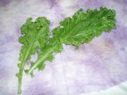 1-23 Mustard Greens