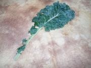 1-23 Kale Greens