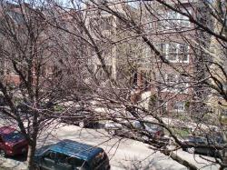 09 04-26 no leaves tree