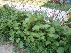09 08-15 Garden 5