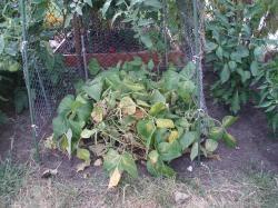 09 08-15 Garden 7
