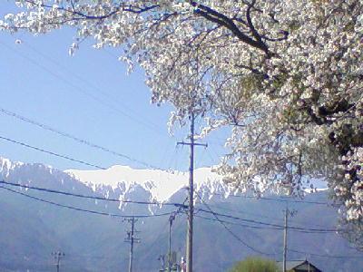 桜と駒ヶ岳