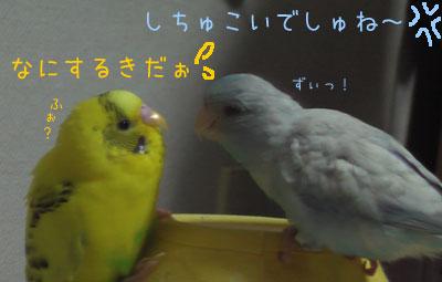 popomumu32.jpg