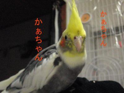 1316_convert_20100713211542.jpg