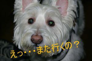 えっ 2009-11-14 021