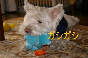 m_PEN くまさん 066