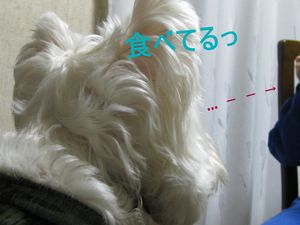 フォグバー 009ri