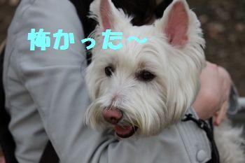 m_sakura 141
