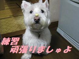 mini_鼻パク 001