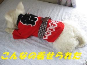 mini_祭り袢纏 006り