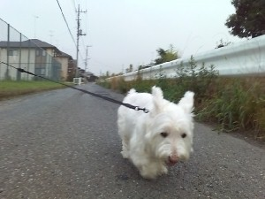 mini_朝散歩 001