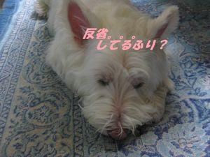 BBQ201008 003り