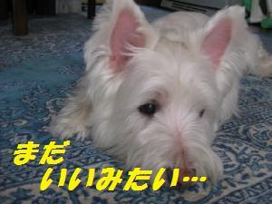 mini_ジャッキー9月 005