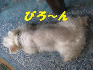 mini_ジャッキー9月 002