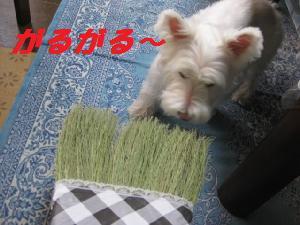 mini_掃除用具 003
