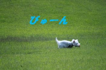 mini_丹沢湖&湘南 024