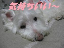 mini_ベッド 009