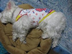 mini_ベッド0014