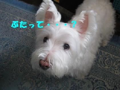mini_mini_コスモス 051
