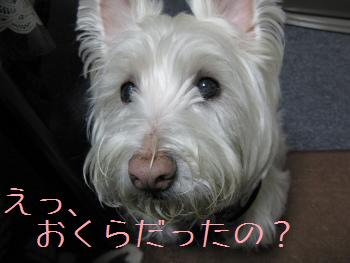 okura 025り