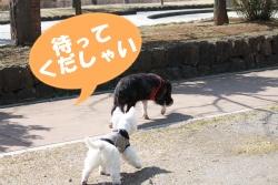 いちご狩り EOS 010R