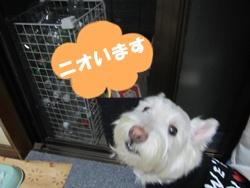 叉焼の匂い (7)