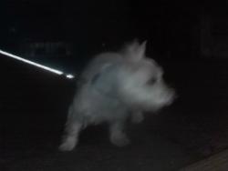 夜の散歩 001