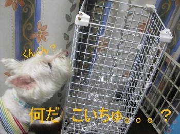 mini_007-2.jpg
