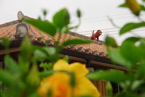 okinawa008.jpg