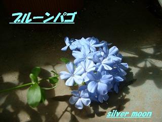 DSCF0165.jpg
