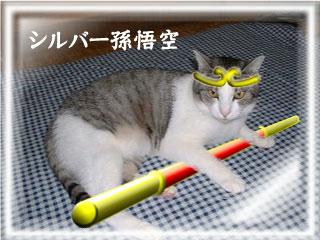 regolasu_521_9.jpg