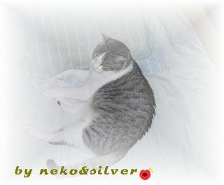 silvernoko1.jpg