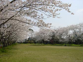 09年4月8日 庭の水仙と猿袋公園 016