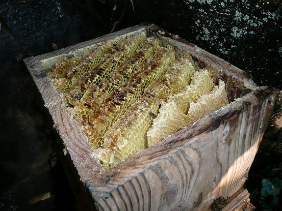 愛藤寺の採蜜08,10,1 011