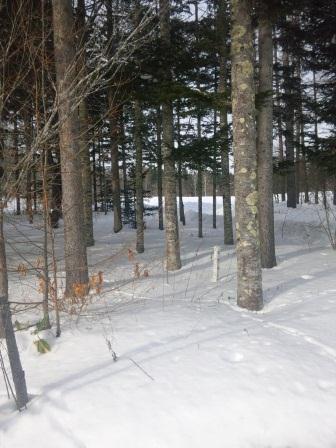 雪の牧野林