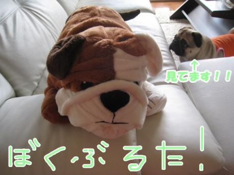 IMG_1381_convert_20080909002345.jpg