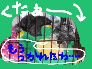 snap_jirokkosan_200810117134.jpg