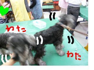 snap_jirokkosan_200810117625.jpg